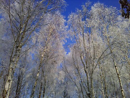 2010-12-05T10-56-45.jpeg